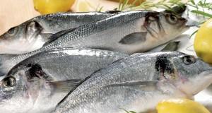 كيف نتأكّد من أن السمك طازجاً؟